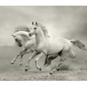 GreenBerry декоративное панно, 078 (Белые лошади), размер 3.10 * 2,7 м, 3л.